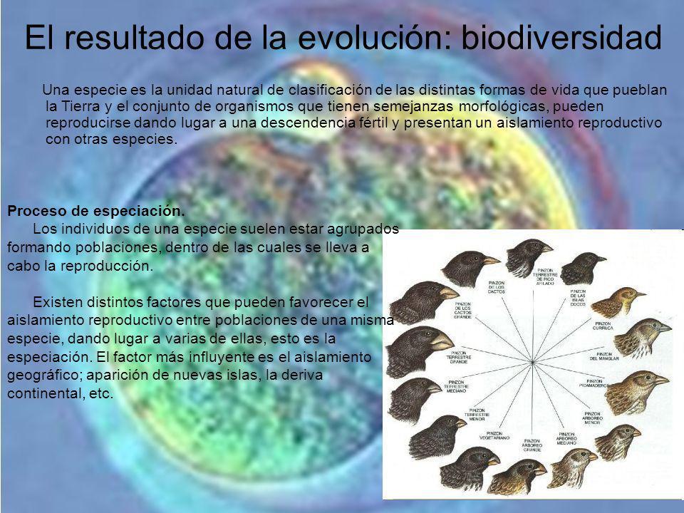 El resultado de la evolución: biodiversidad Una especie es la unidad natural de clasificación de las distintas formas de vida que pueblan la Tierra y