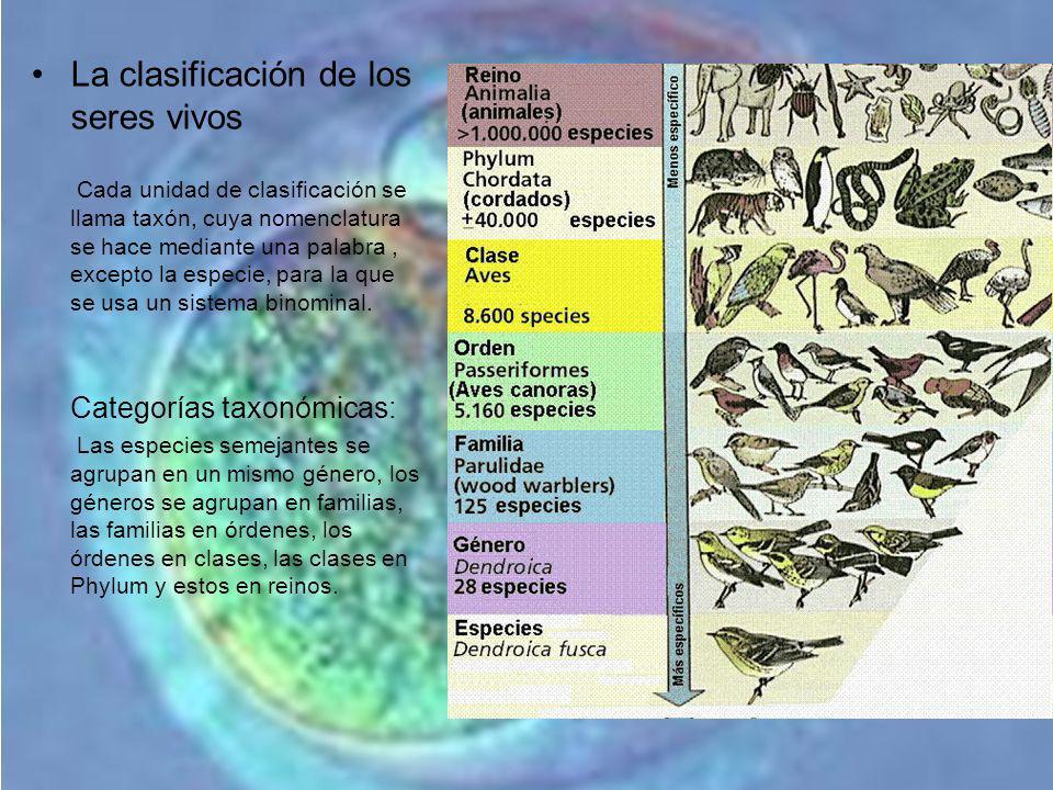 La clasificación de los seres vivos Cada unidad de clasificación se llama taxón, cuya nomenclatura se hace mediante una palabra, excepto la especie, p