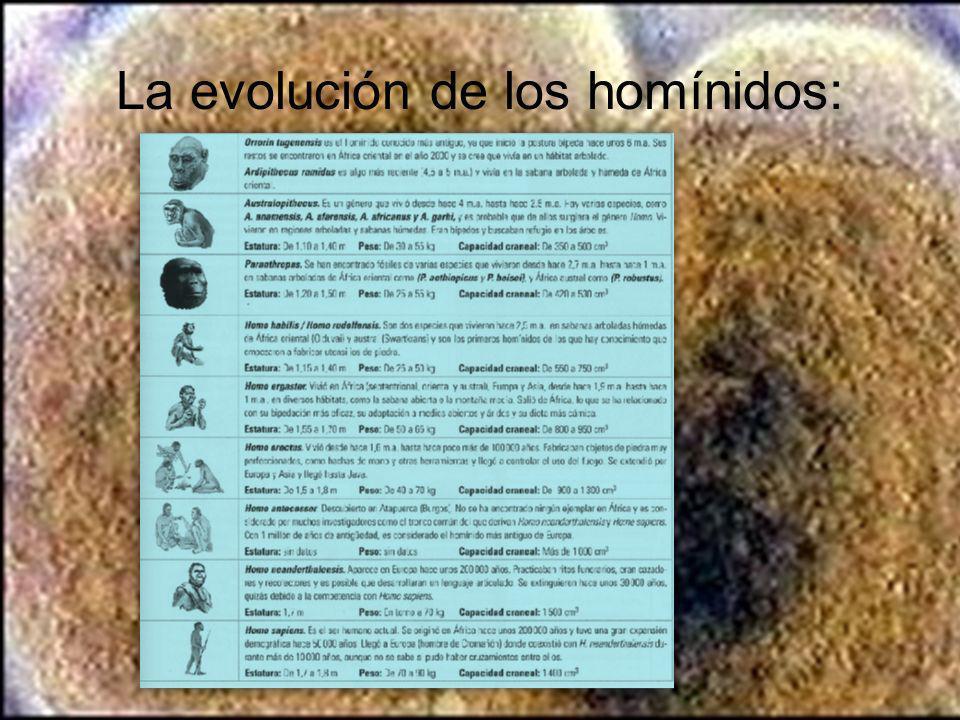 La evolución de los homínidos: