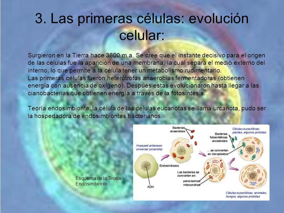 3. Las primeras células: evolución celular: Surgieron en la Tierra hace 3800 m.a. Se cree que el instante decisivo para el origen de las células fue l