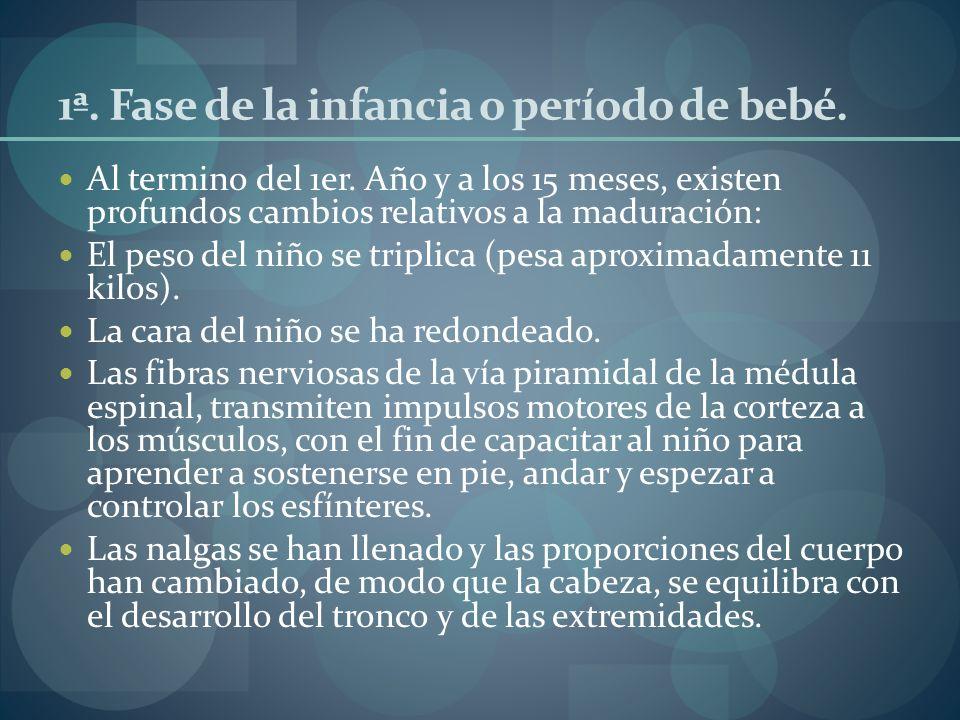 1ª. Fase de la infancia o período de bebé. Al termino del 1er. Año y a los 15 meses, existen profundos cambios relativos a la maduración: El peso del