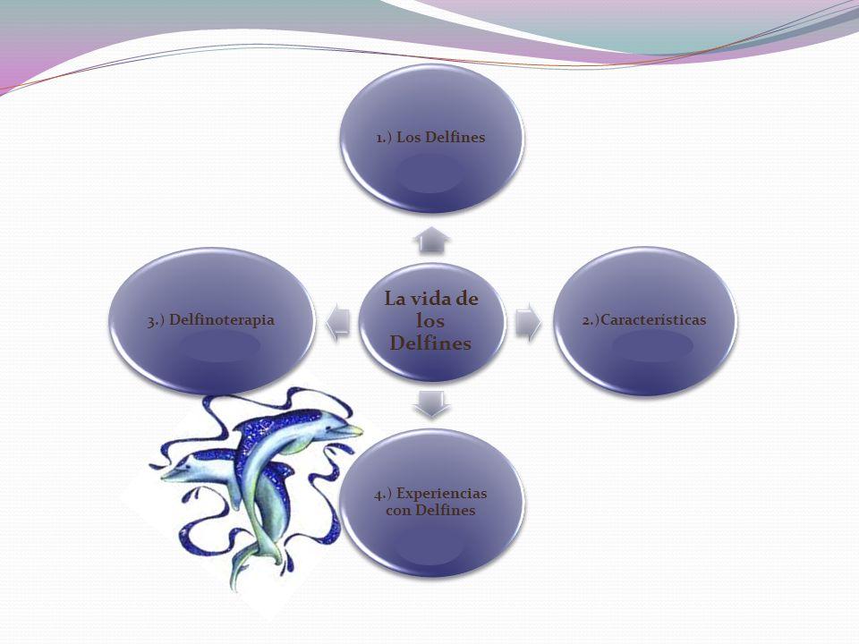 La vida de los Delfines 1.) Los Delfines2.)Características 4.) Experiencias con Delfines 3.) Delfinoterapia