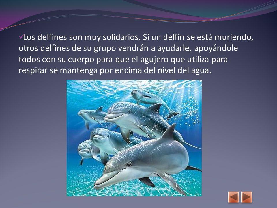 Los delfines son muy solidarios.