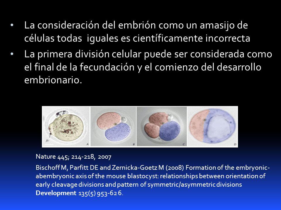 La consideración del embrión como un amasijo de células todas iguales es científicamente incorrecta La primera división celular puede ser considerada