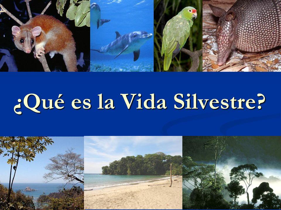Vida Silvestre La vida silvestre esta conformada por la fauna y la flora continental e insular que vive en condiciones naturales temporales o permanentes, en el territorio nacional.