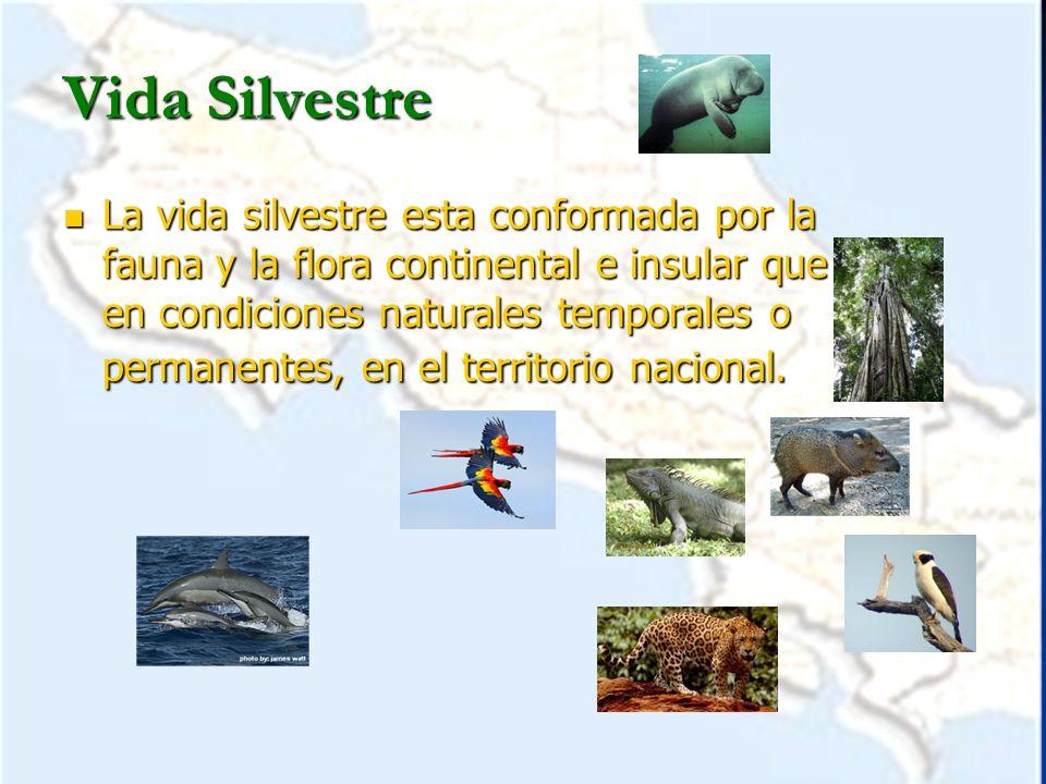 Áreas Silvestres Protegidas Son zonas geográficas delimitadas, constituidas por terrenos, humedales y porciones de mar.