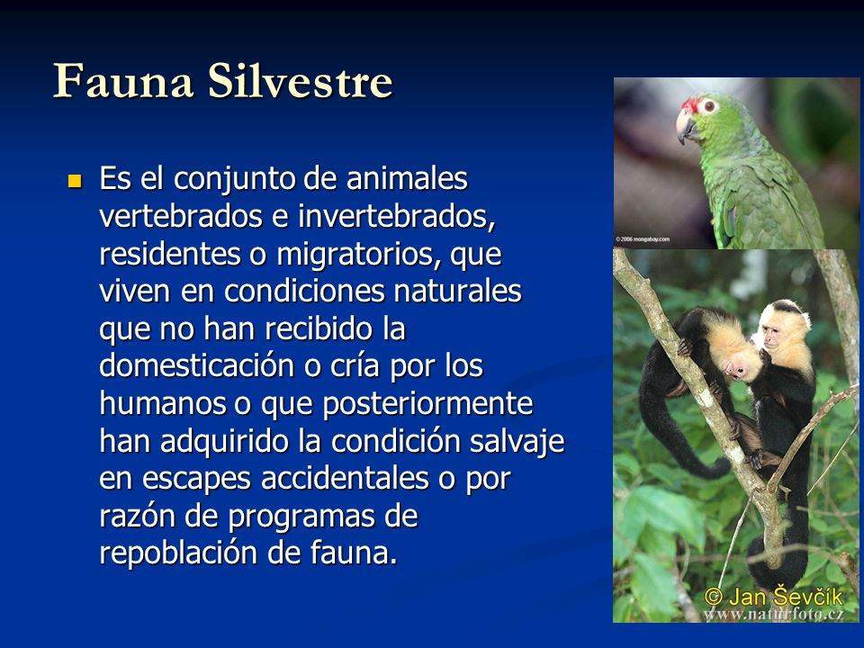 Refugio de Vida Silvestre Gandoca - Manzanillo Protege el hábitat de especies amenazadas como el manatí y las tortugas marinas baula, verde y carey, las cuales anidan en las costas del Refugio.