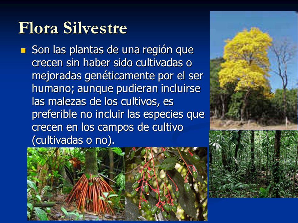 Reserva Forestal Terrenos, en su mayoría de aptitud forestal, apropiados para la producción de madera.