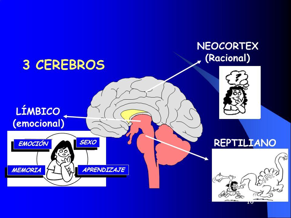 10 EMOCIÓN SEXO MEMORIA APRENDIZAJE 3 CEREBROS REPTILIANO (Instintivo) NEOCORTEX (Racional) LÍMBICO (emocional)