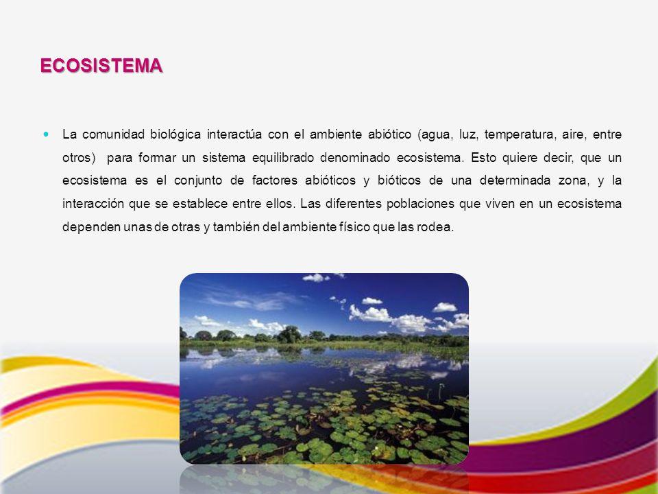 ECOSISTEMA La comunidad biológica interactúa con el ambiente abiótico (agua, luz, temperatura, aire, entre otros) para formar un sistema equilibrado denominado ecosistema.