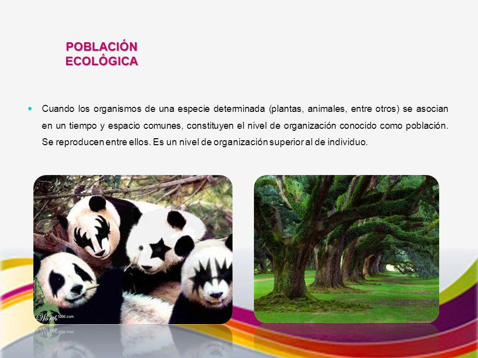 POBLACIÓN ECOLÓGICA Cuando los organismos de una especie determinada (plantas, animales, entre otros) se asocian en un tiempo y espacio comunes, constituyen el nivel de organización conocido como población.