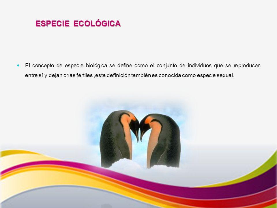 ESPECIE ECOLÓGICA El concepto de especie biológica se define como el conjunto de individuos que se reproducen entre sí y dejan crías fértiles,esta definición también es conocida como especie sexual.