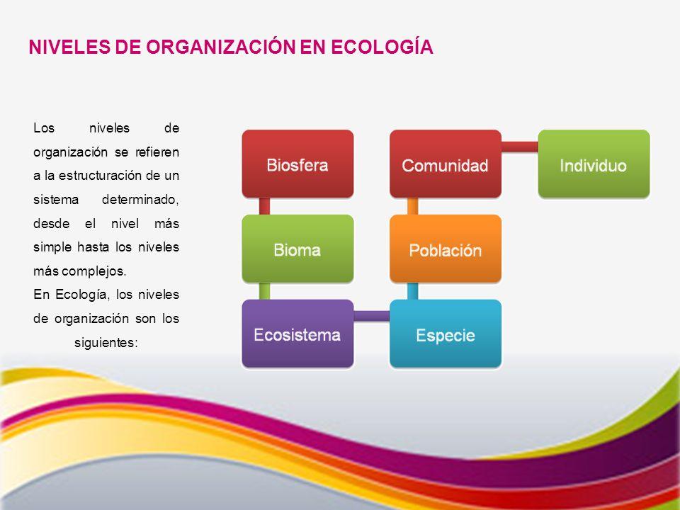 NIVELES DE ORGANIZACIÓN EN ECOLOGÍA Los niveles de organización se refieren a la estructuración de un sistema determinado, desde el nivel más simple hasta los niveles más complejos.