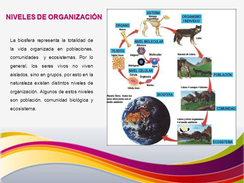 NIVELES DE ORGANIZACIÓN La biosfera representa la totalidad de la vida organizada en poblaciones, comunidades y ecosistemas.
