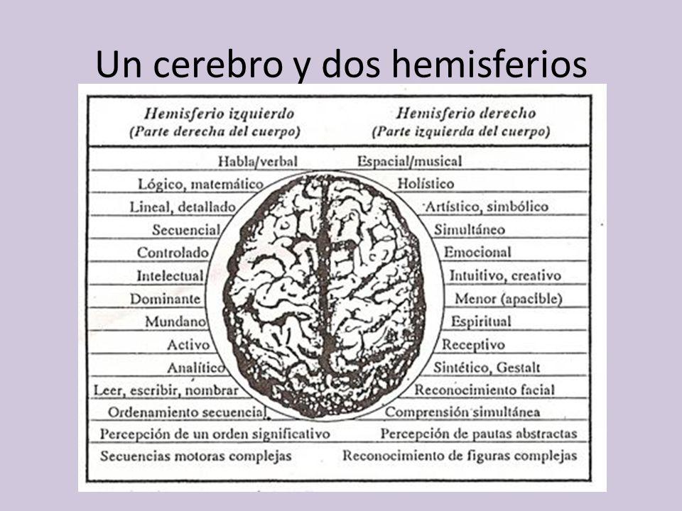 Un cerebro y dos hemisferios