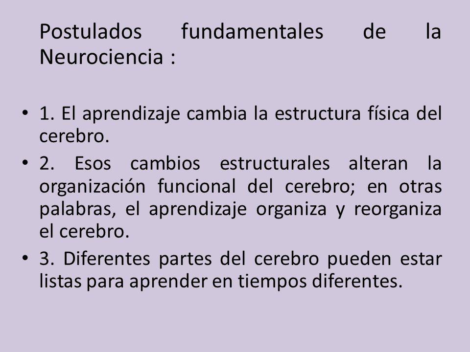 Postulados fundamentales de la Neurociencia : 1.