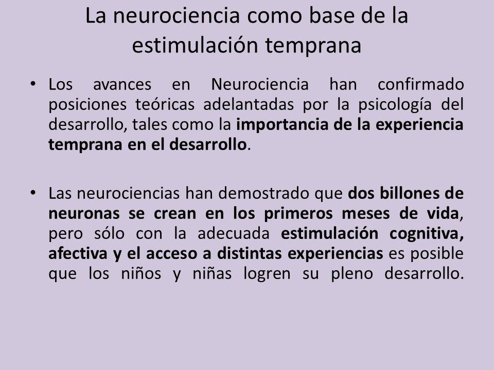 ¿De qué manera influye el entorno en el desarrollo cerebral.