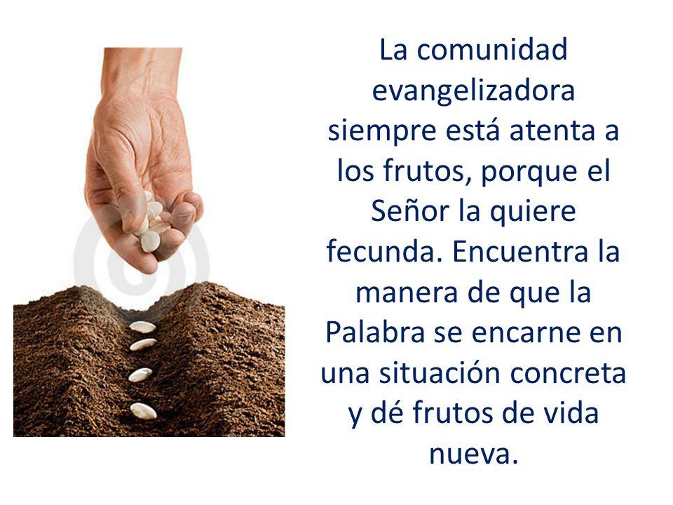La comunidad evangelizadora siempre está atenta a los frutos, porque el Señor la quiere fecunda.