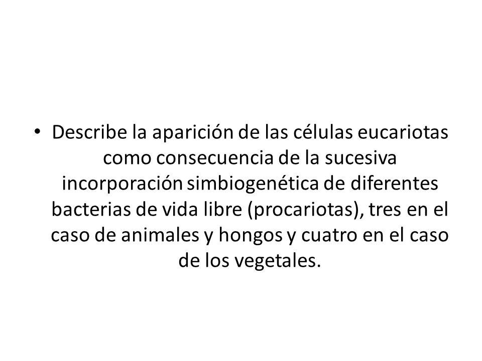 Describe la aparición de las células eucariotas como consecuencia de la sucesiva incorporación simbiogenética de diferentes bacterias de vida libre (p