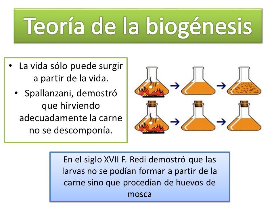 Conclusiones del experimento de Miller a) La atmósfera primitiva era reductora b) En la atmósfera se pueden producir compuestos orgánicos.