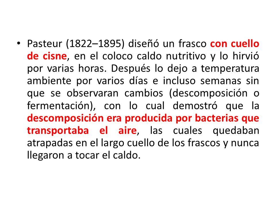 Pasteur (1822–1895) diseñó un frasco con cuello de cisne, en el coloco caldo nutritivo y lo hirvió por varias horas. Después lo dejo a temperatura amb