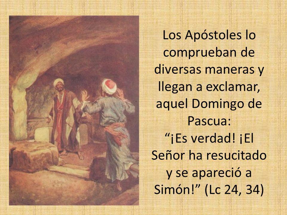 Los Apóstoles lo comprueban de diversas maneras y llegan a exclamar, aquel Domingo de Pascua: ¡Es verdad! ¡El Señor ha resucitado y se apareció a Simó