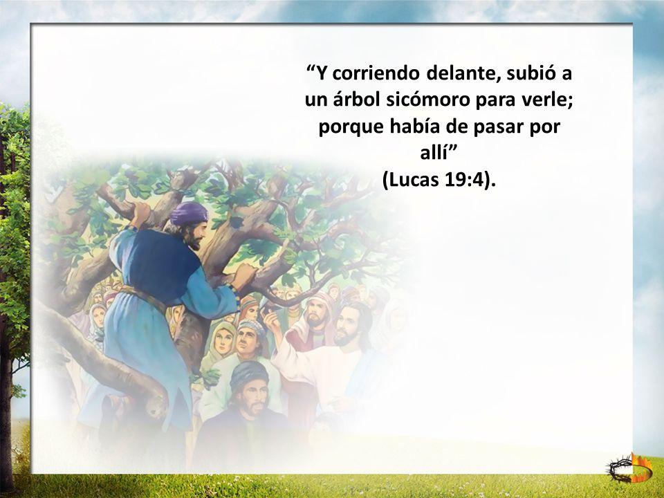 Y corriendo delante, subió a un árbol sicómoro para verle; porque había de pasar por allí (Lucas 19:4).