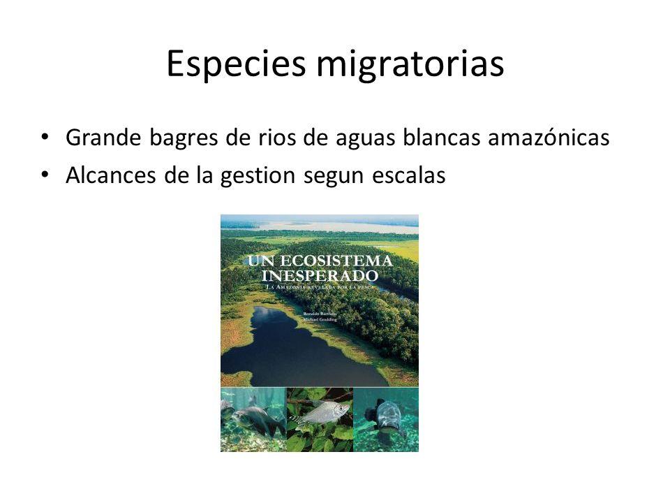 Especies migratorias Grande bagres de rios de aguas blancas amazónicas Alcances de la gestion segun escalas