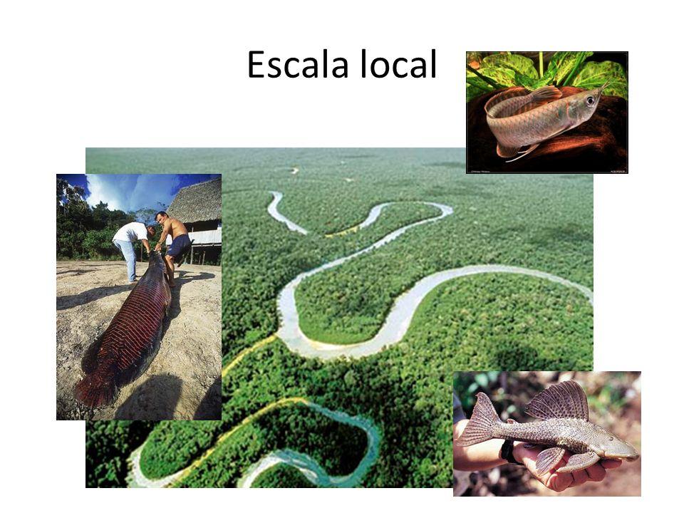 Escala local