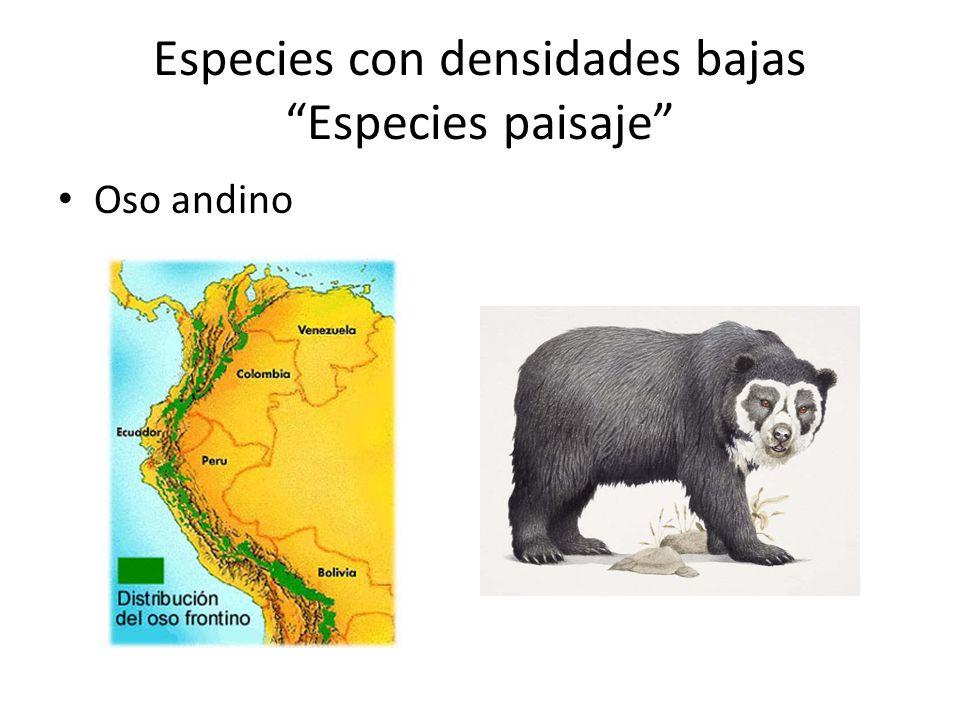 Especies con densidades bajas Especies paisaje Oso andino