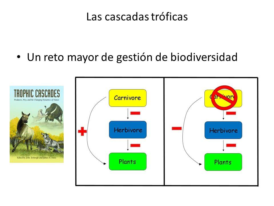 Las cascadas tróficas Un reto mayor de gestión de biodiversidad