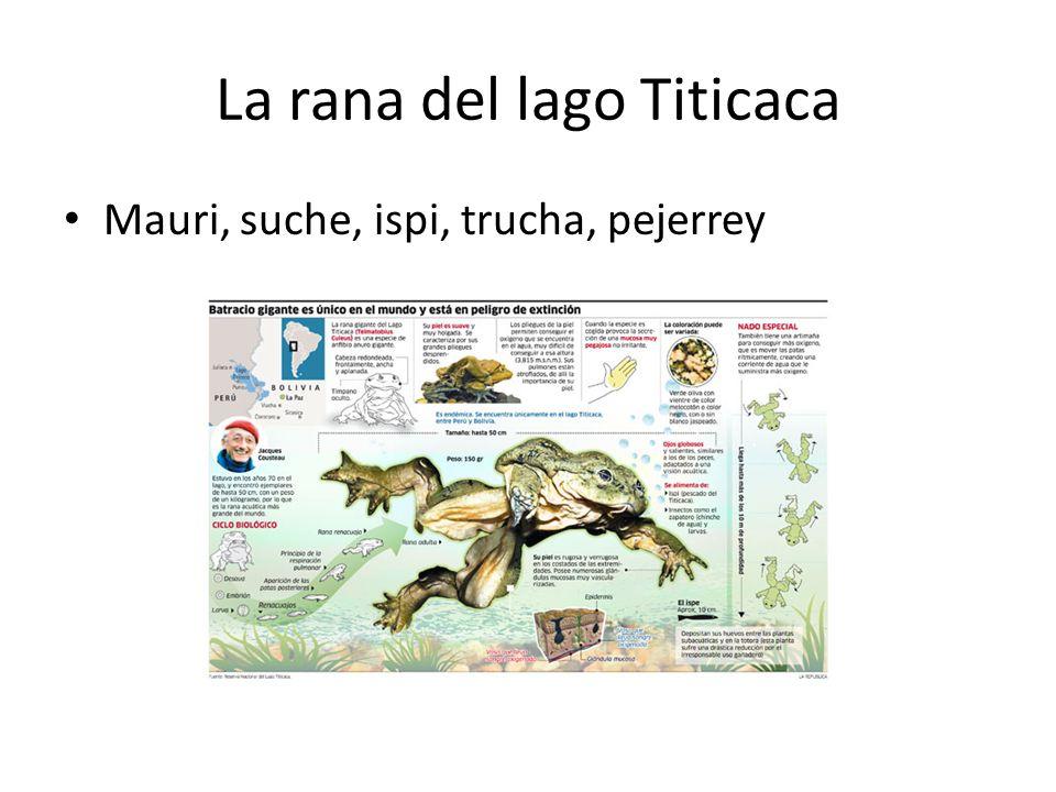 La rana del lago Titicaca Mauri, suche, ispi, trucha, pejerrey