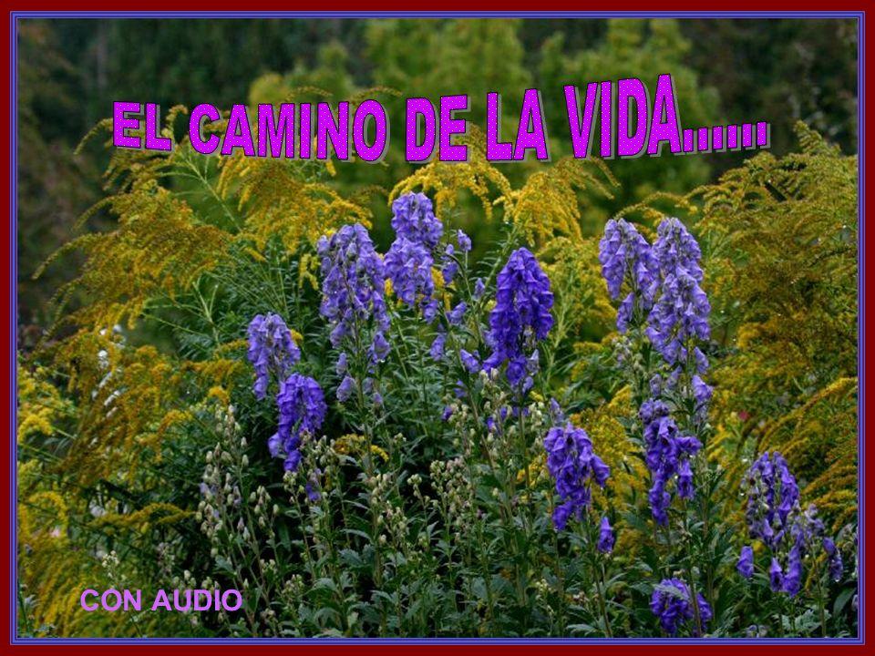 Suiza Música: Time to said goodbye (Sarah Brightman y Andrea Bocelli) CON AUDIO