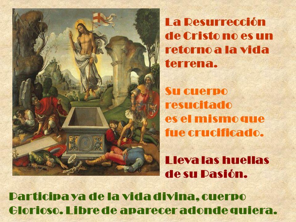 La Resurrección de Cristo no es un retorno a la vida terrena. Su cuerpo resucitado es el mismo que fue crucificado. Lleva las huellas de su Pasión. Pa