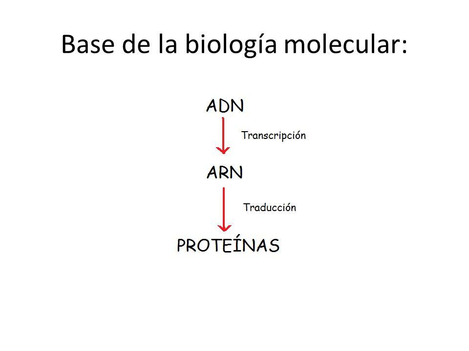Base de la biología molecular: