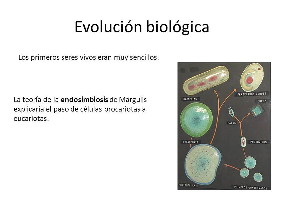 Evolución biológica Los primeros seres vivos eran muy sencillos. La teoría de la endosimbiosis de Margulis explicaría el paso de células procariotas a