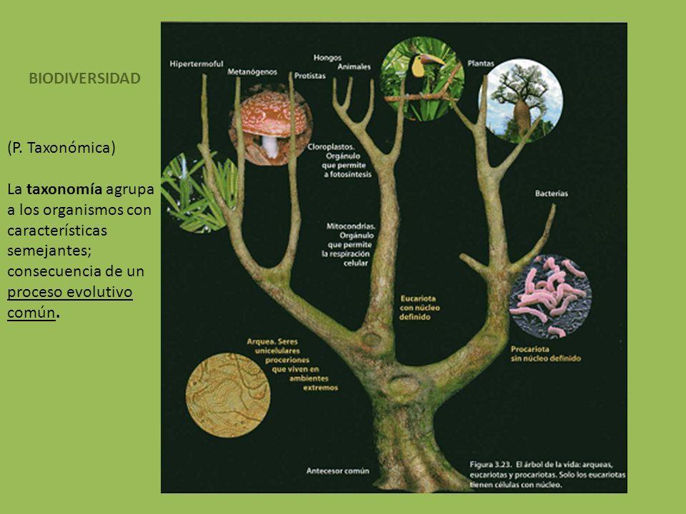 BIODIVERSIDAD (P. Taxonómica) La taxonomía agrupa a los organismos con características semejantes; consecuencia de un proceso evolutivo común.