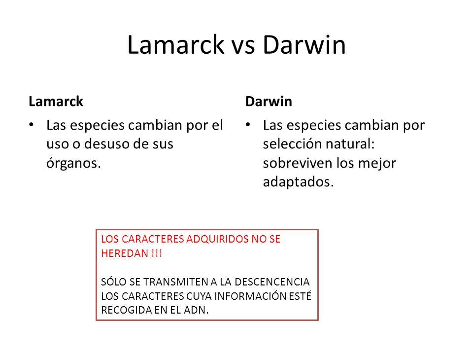 Lamarck vs Darwin Lamarck Las especies cambian por el uso o desuso de sus órganos. Darwin Las especies cambian por selección natural: sobreviven los m