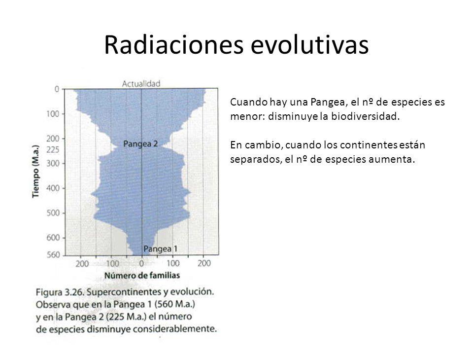 Radiaciones evolutivas Cuando hay una Pangea, el nº de especies es menor: disminuye la biodiversidad. En cambio, cuando los continentes están separado