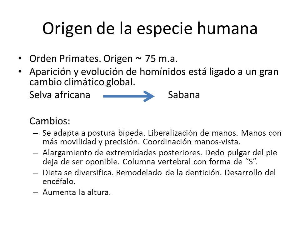 Origen de la especie humana Orden Primates. Origen ~ 75 m.a. Aparición y evolución de homínidos está ligado a un gran cambio climático global. Selva a