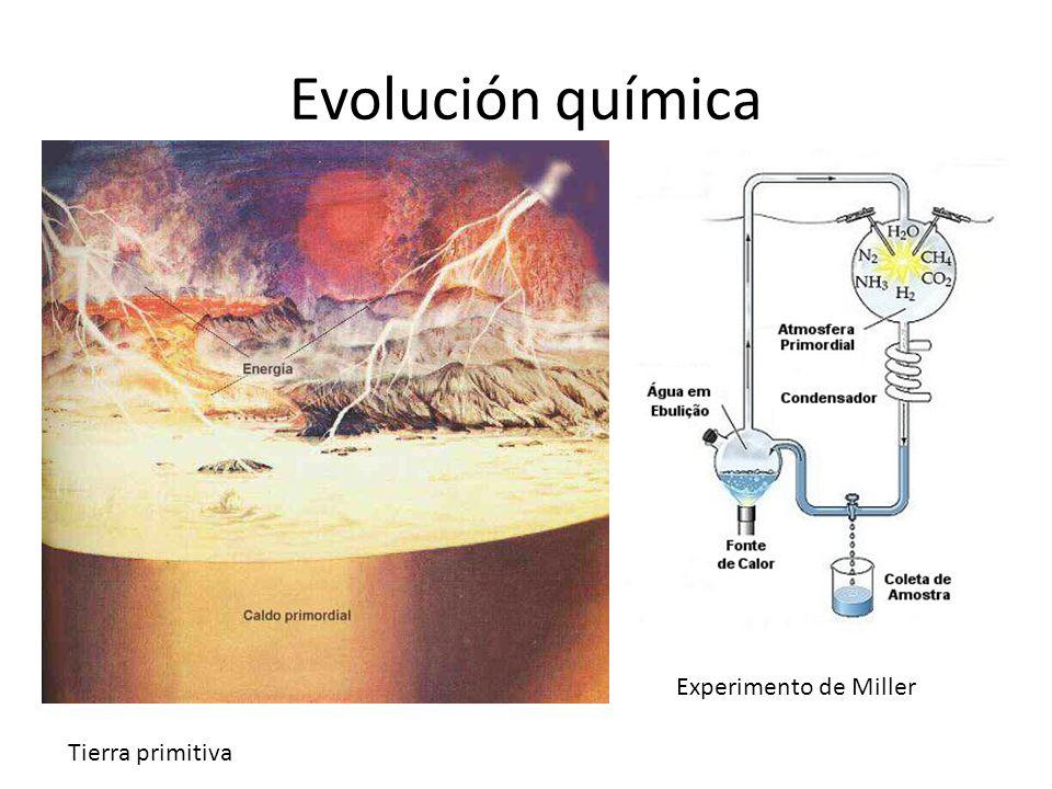Teoria de Evolucion Quimica Evolución Química Tierra