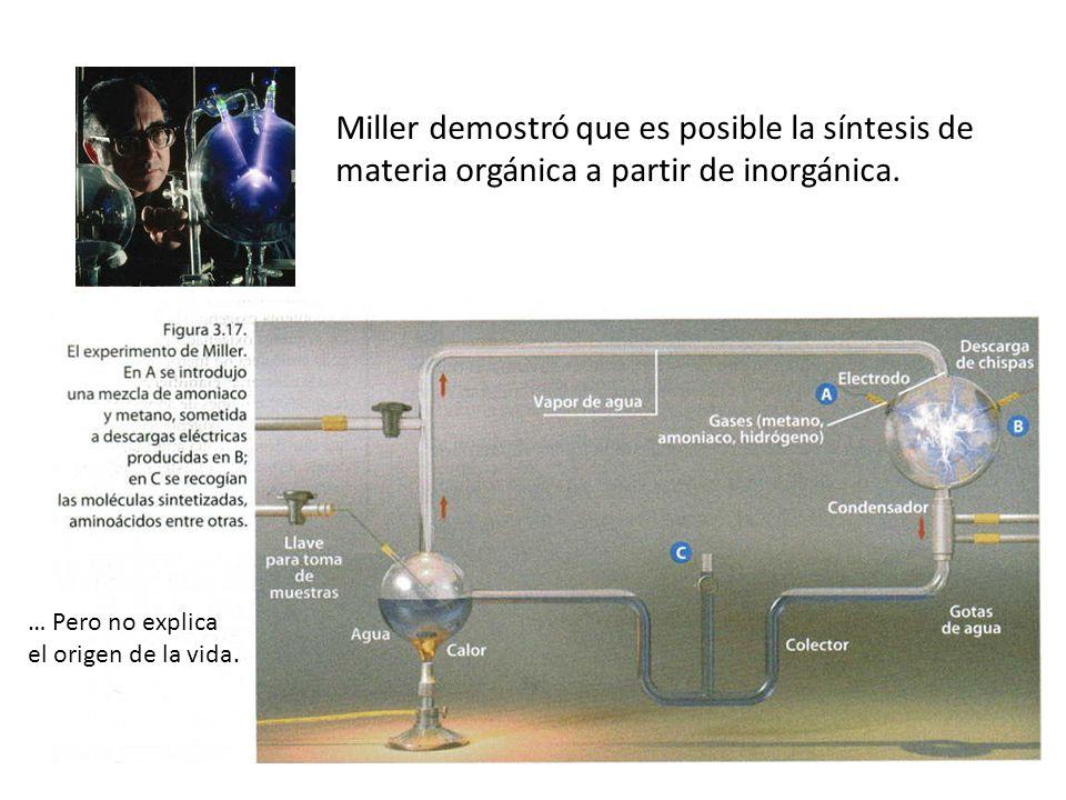 Miller demostró que es posible la síntesis de materia orgánica a partir de inorgánica. … Pero no explica el origen de la vida.