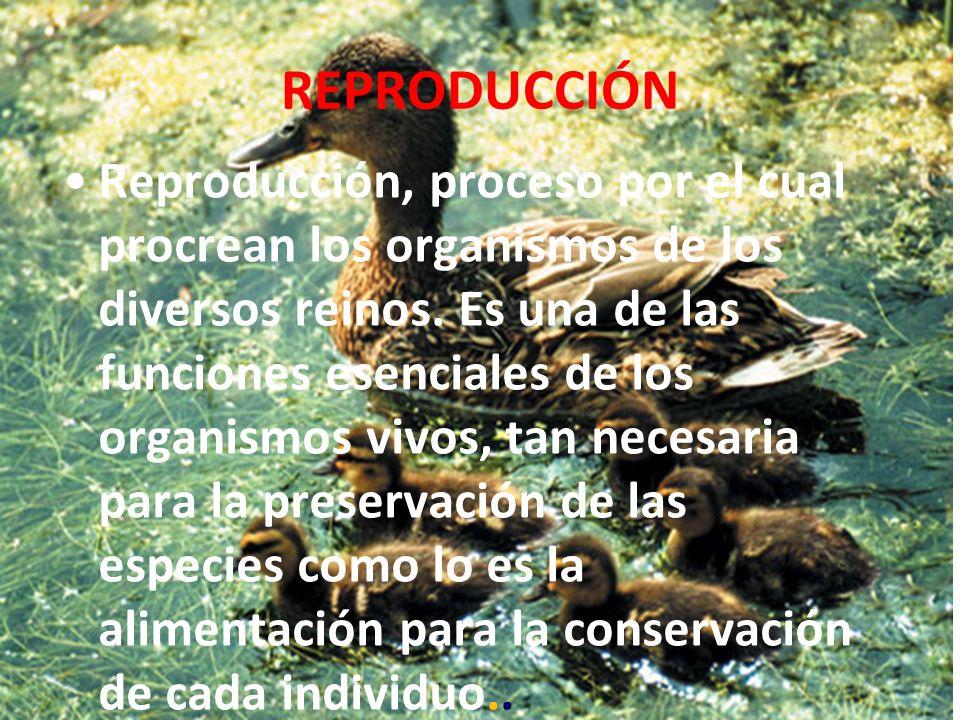 REPRODUCCIÓN Reproducción, proceso por el cual procrean los organismos de los diversos reinos.