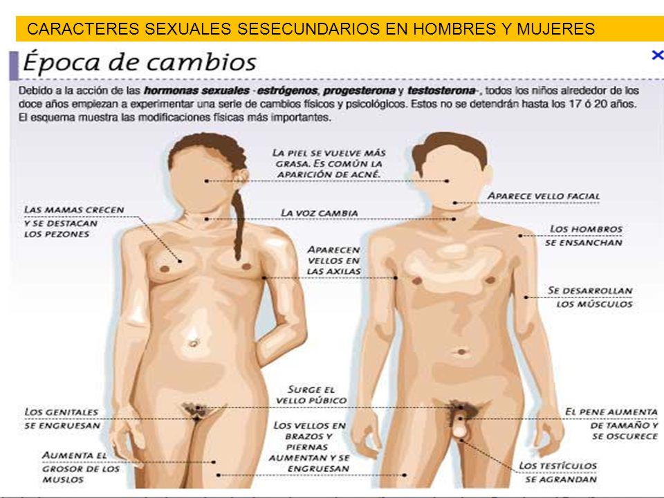 CARACTERES SEXUALES SESECUNDARIOS EN HOMBRES Y MUJERES