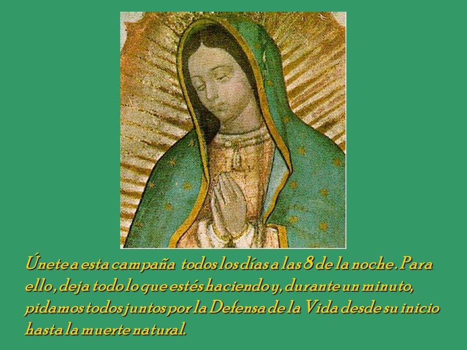 ...queremos, en España, organizar una campaña similar a la de Inglaterra, invitando a las personas a rezar durante un minuto todas las noches por la D