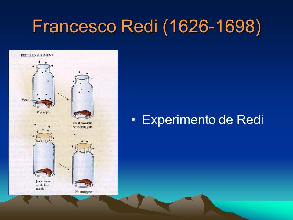 Francesco Redi (1626-1698) Experimento de Redi