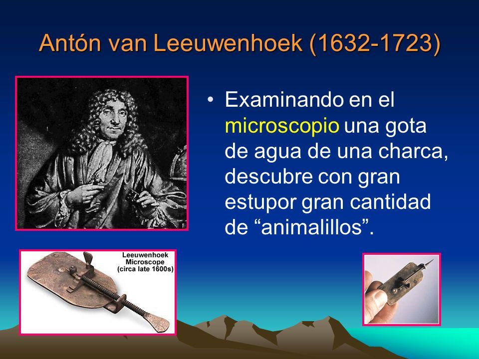 Antón van Leeuwenhoek (1632-1723) Examinando en el microscopio una gota de agua de una charca, descubre con gran estupor gran cantidad de animalillos.