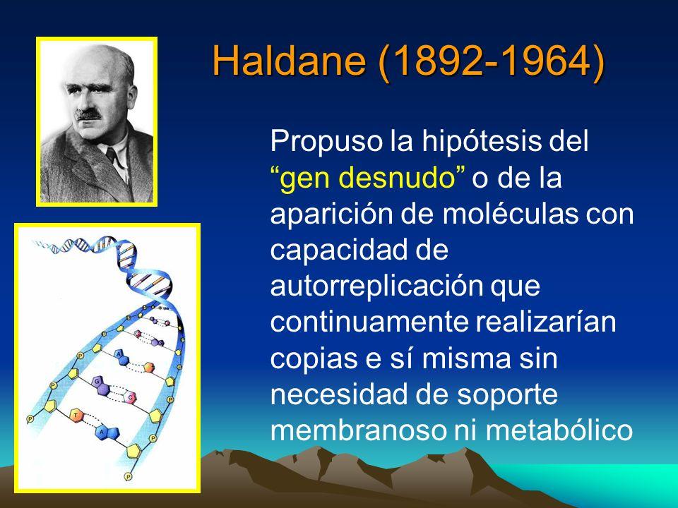 Haldane (1892-1964) Haldane (1892-1964) Propuso la hipótesis del gen desnudo o de la aparición de moléculas con capacidad de autorreplicación que cont