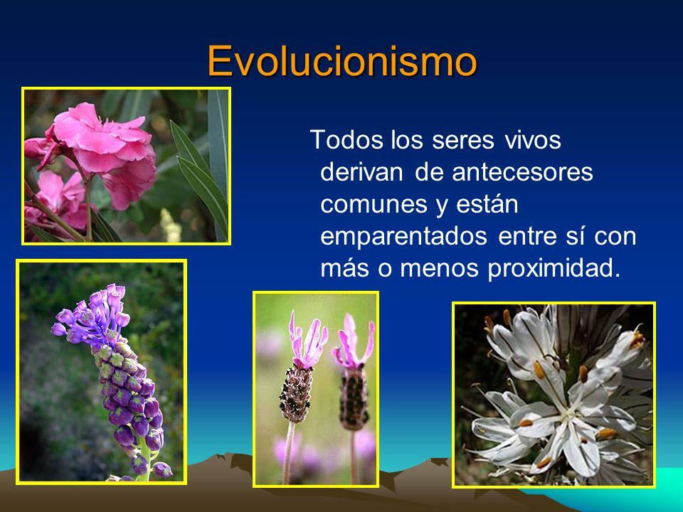 Evolucionismo Todos los seres vivos derivan de antecesores comunes y están emparentados entre sí con más o menos proximidad.