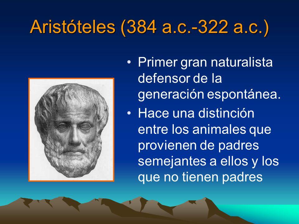 Aristóteles (384 a.c.-322 a.c.) Primer gran naturalista defensor de la generación espontánea. Hace una distinción entre los animales que provienen de